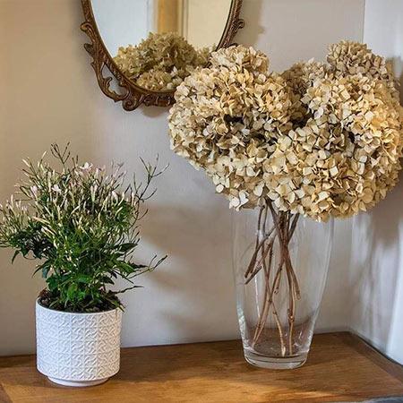 rohan suite flowers